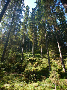 Evon retkeilyalue, Niemisjärvet - Evo hiking area, Niemisjärvet