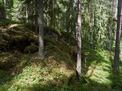 Kintulami forests