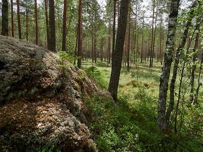 Kintulammi forest
