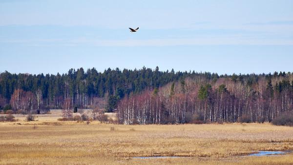 Puurijärven ja Isosuon kansallispuisto