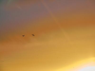 Icarus. Crane