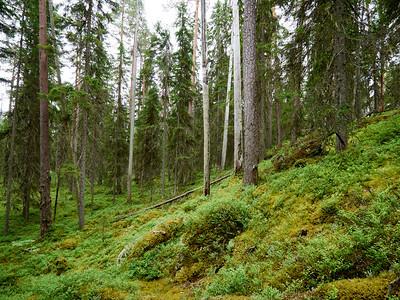 Pyha Hakki National Park