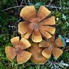 Sienimuodot - Mushroom shapes