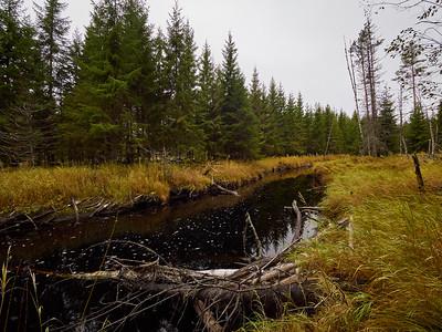 Liesijoki.  Seitseminen National Park