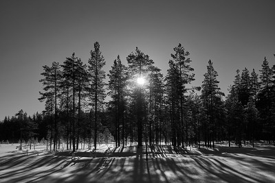 Morning sun bw