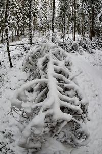 Snowy skeletons