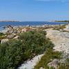 Common seabuckthorn at Lyokinmaa