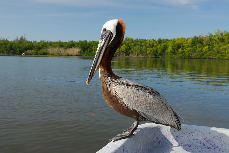 DSC_4192 Everglades 2009 RS