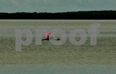 Everglades National Park  Flamingo Bay