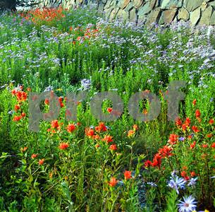 Mt Rainer September wildflowers
