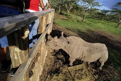 Blind Rhino