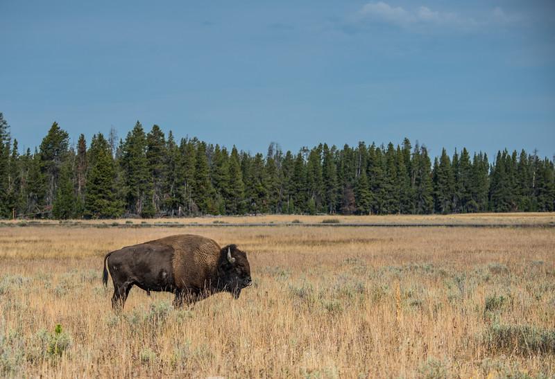 Yellowstone - First Pass-30