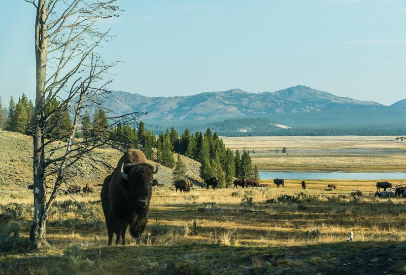 Yellowstone - First Pass-43