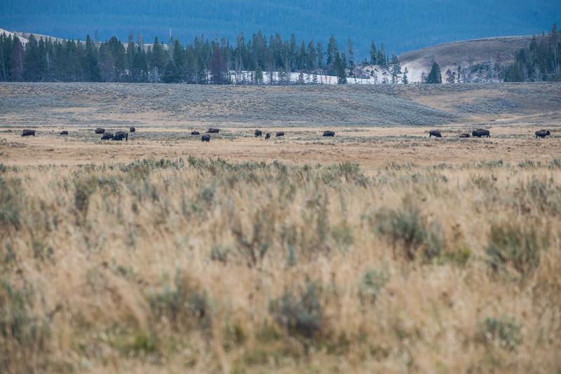 Yellowstone - First Pass-37