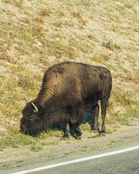 Yellowstone - First Pass-42