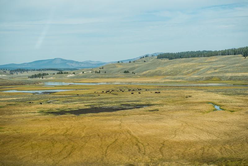 Yellowstone - First Pass-33