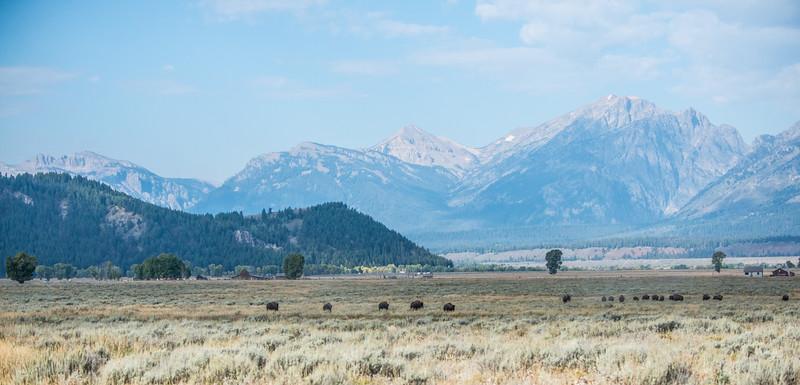 Yellowstone - First Pass-17