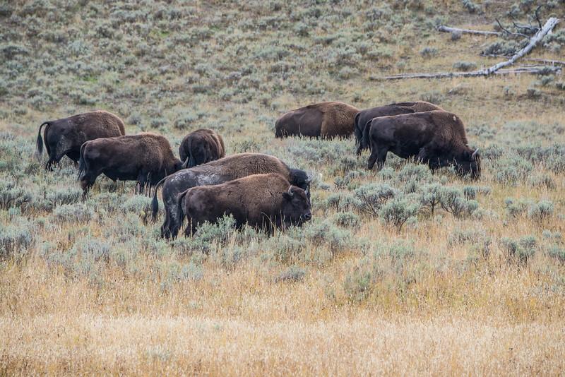 Yellowstone - First Pass-38