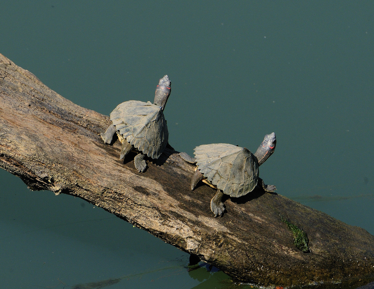 You look in your direction and I will look the other way. - Turtles