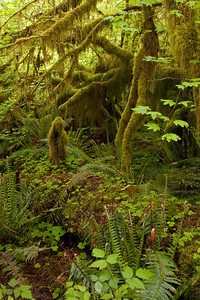 Hiking thru the forest I began to understand Native American beliefs. As you look around things take on a magical spirit! (look at the vertical tree in the pic and do you see a woman?) Is moss man her companion?
