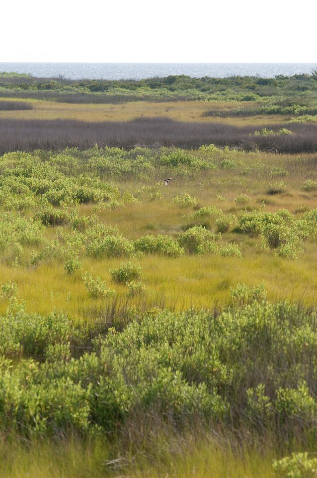 Beach Wildlife 2009 - a --13