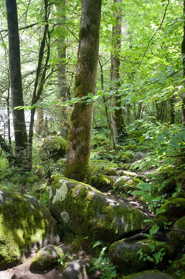 Smokey Mountains 2010-45