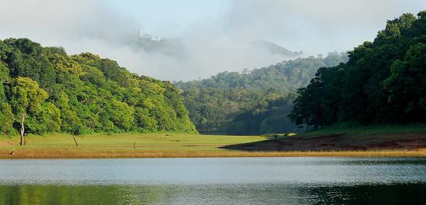 Rain Forest..
