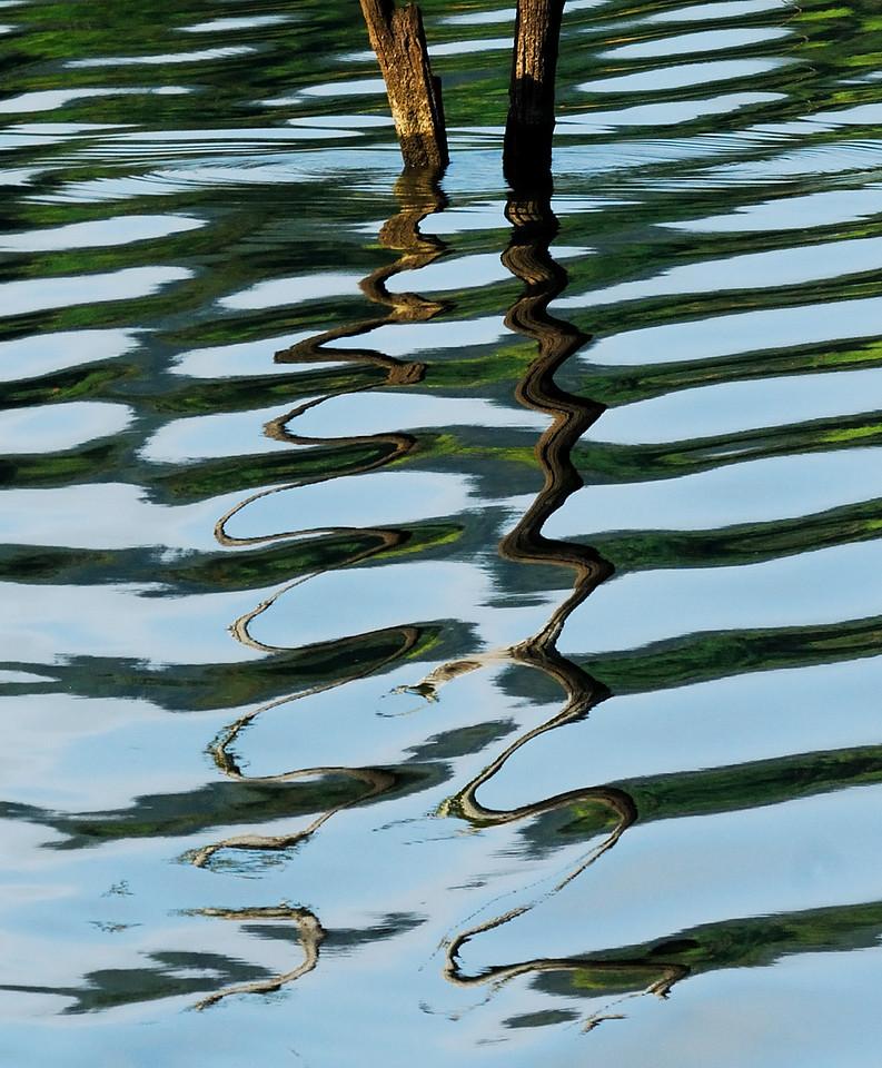 Illusions in Nature.