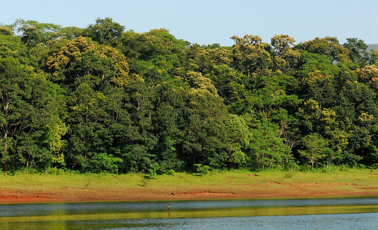 Rain forests of Thekkady.