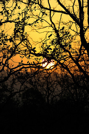 Sunrise, Kanha April 2009