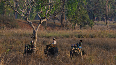 Tiger trackers, Kanha, April 2009