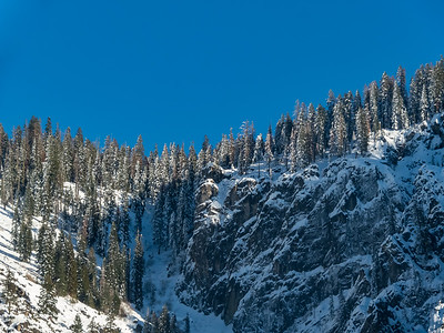 Snow still clinging to tree branches on the ridge