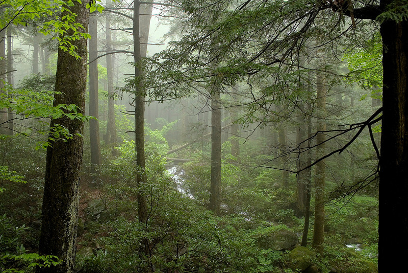 Early morning mist in the forest