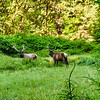 On uper loop of Fern Canyon trail, above the cnayon. Prarie Creek Redwoods State Park
