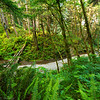 Fern Canyon, Prarie Creek Redwoods State Park
