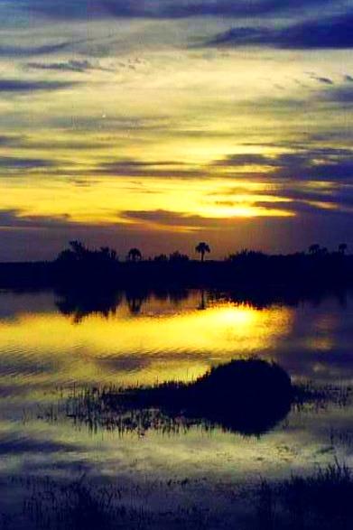 Merritt Island Wildlife Regufe
