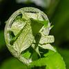 Baby fern