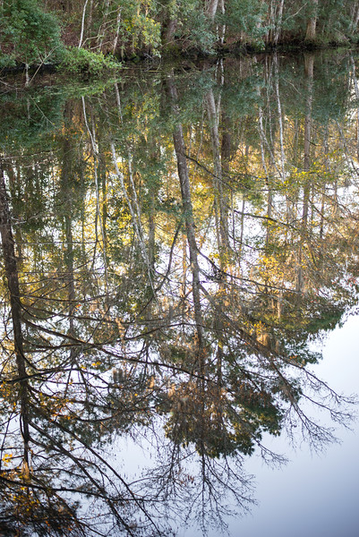 Reflections in a watery mirror