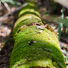 Moss covered log at Washington Oaks State Park trail