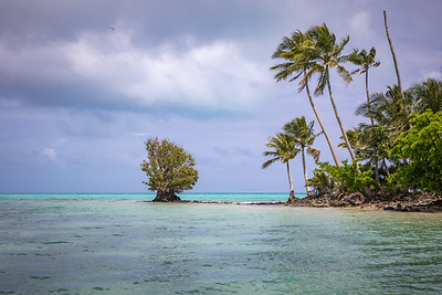 Native Plants - Micronesa