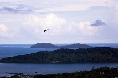 Gray Swiftlet, Aerodramus vanikorensis, an indigenous swiftlet of Micronesia, Sokehs Mountain, Pohndollap, Pohnpei, FSM