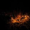 Den brennande busk...