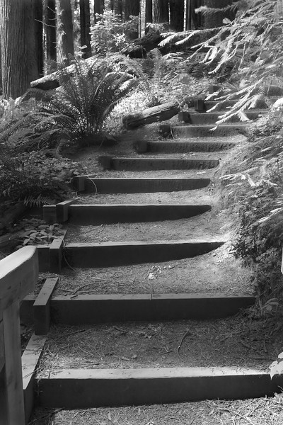 Wooden park stairs among the redwoods in Arcata, CA