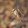 Fly5214