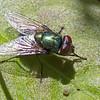 Fly(8x12)5221