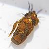 Bugs5258