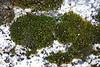 Lichen on a granite rock
