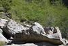 Marmot on the rock - center