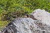 Marmot3526