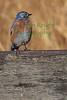 Bluebird8955